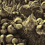 The Produce Of The Earth In Sepia Art Print