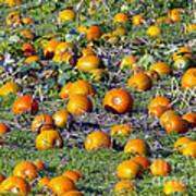 The Pumpkin Patch Art Print