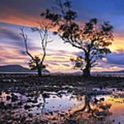 The Reflex Of Tree In Sunset Art Print by Arthit Somsakul
