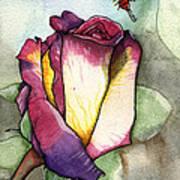 The Rose Art Print by Nora Blansett