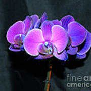 The Shade Of Orchids Art Print