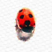 The Shy Ladybug Art Print