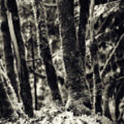 The Silent Woods Art Print