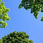 The Sky Through Trees Art Print