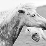 The Smiling Horse Art Print