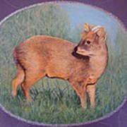 The Southern Pudu Art Print