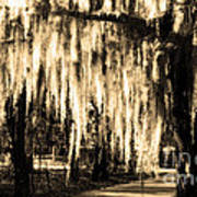 The Spanish Moss Art Print