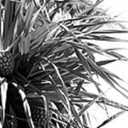 The Tourist Pineapple Black And White Art Print