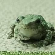 The Tree Frog Art Print