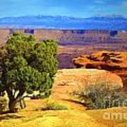 The Tree The Canyon And The Mountains Art Print