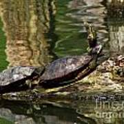 The Turtles Art Print