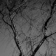 The Widow Tree Art Print