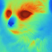 Thermogram Of A Cat Art Print
