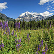 This Is British Columbia No.70 - Summer At Mount Robson Art Print