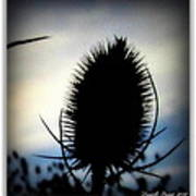 Thistle In The Sky Art Print