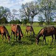 Thoroughbred Horses, Yearlings, Ireland Art Print