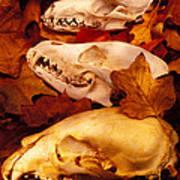 Three Animal Skulls Art Print by Garry Gay