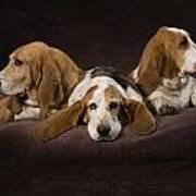 Three Basset Hound On Brown Muslin Art Print