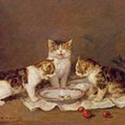 Three Cats - Red Cherries And Bees Art Print