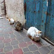 Three Cats In Essaouira Art Print
