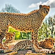 Three Cheetahs Art Print
