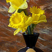 Three Daffodils Art Print