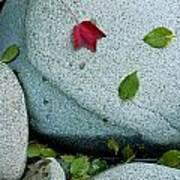 Three Fallen Leaves Lie On A Rock Art Print