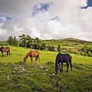 Three Horses Grazing In Field Art Print