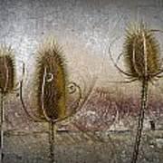 Three Prickly Teasels Art Print