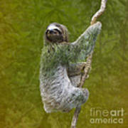 Three-toed Sloth Climbing Art Print by Heiko Koehrer-Wagner