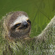 Three-toed Sloth Art Print by Heiko Koehrer-Wagner