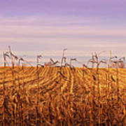 Through The Cornfield Art Print