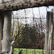 Through The Eye Of The Stick Wood Fence Art Print