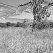 Through The Tall Grasses Art Print