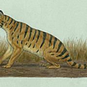 Thylacosmilus Atrox, A Genus Art Print