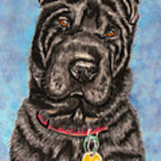 Tia Shar Pei Dog Painting Art Print