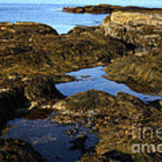 Tidepool In Maine Art Print