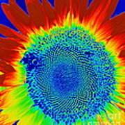 tiedyed Sunflower Art Print