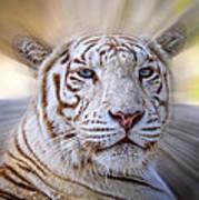 Tiger Blur Art Print