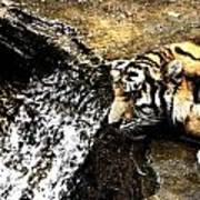 Tiger Falls Art Print