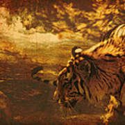 Tiger In The River Art Print