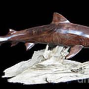 Tiger Shark Print by Kjell Vistnes