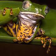 Tiger-stripe Monkey Frog Art Print