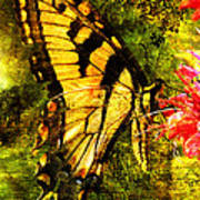 Tiger Swallowtail Butterfly Happily Feeds Art Print