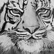 Tiger's Eyes Art Print