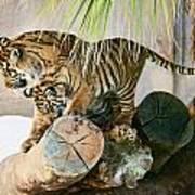Tigers Playing Art Print