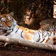 Tigress And Cubs Art Print