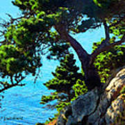 Timber Cove In Sonoma Coast Print by Russ Harris