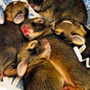 Tiny Bunnies Art Print