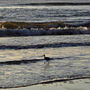 Tip Toeing In The Waves Art Print